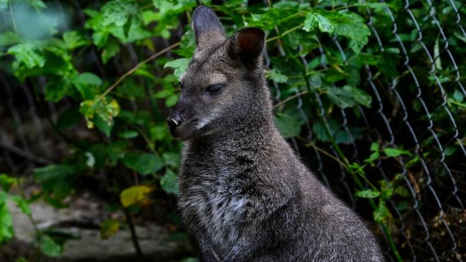 MMM: Mysterious Marsupial Madness