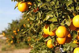 Lights Out, Cope!