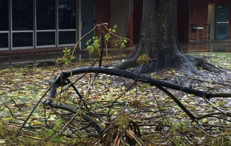 The School's Trees Are Falling Down, Falling Down, Falling Down
