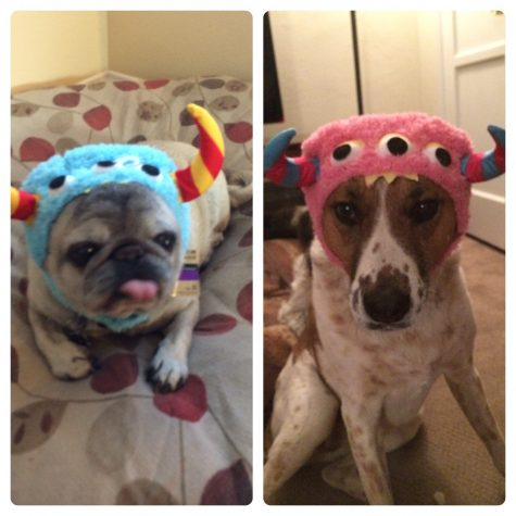 My two dogs (Otis and Zoe), ready for Halloween