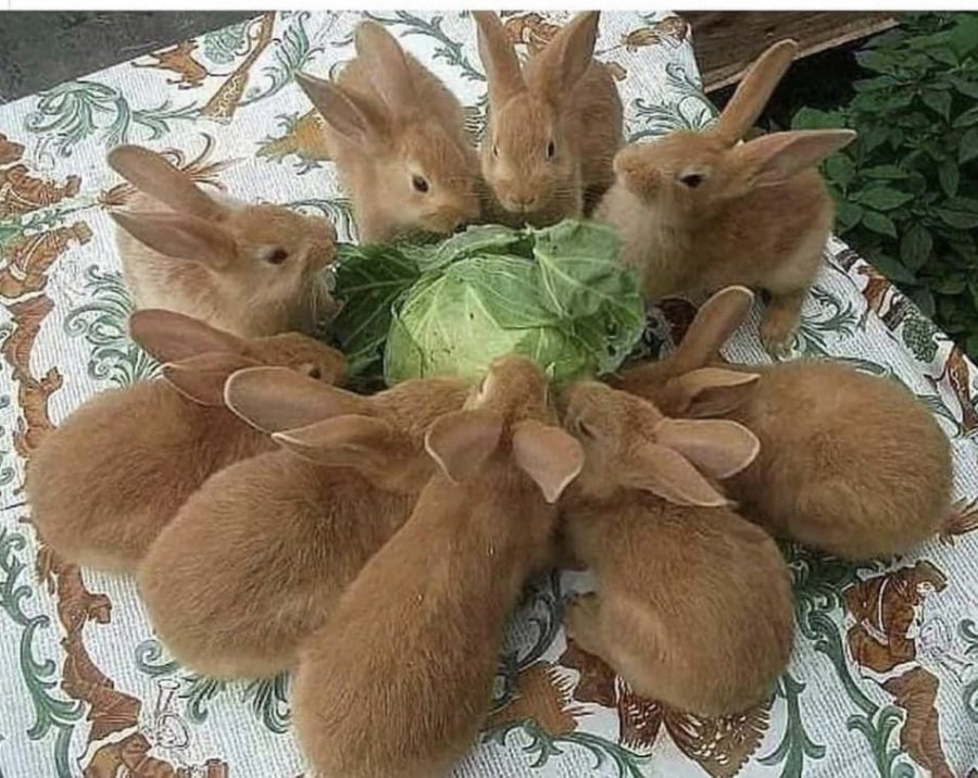A fluffle of bunnies