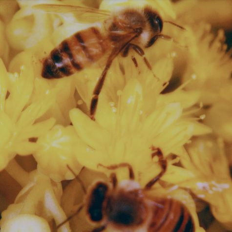 How You Can Successfully and Simply Help Busy Bees