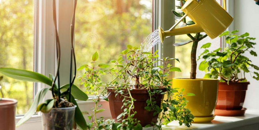 Plant Care Tips/ Mistakes to Avoid