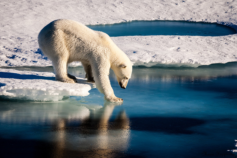 Climate Changes Consequences for Critters... And More